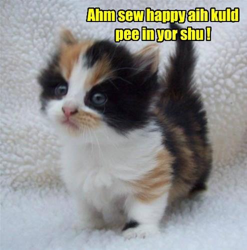 kitten,annoying,pee,cute