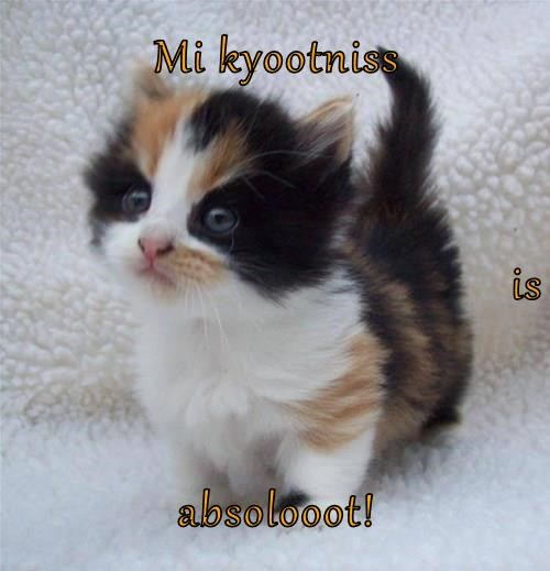 Mi kyootniss is absolooot!