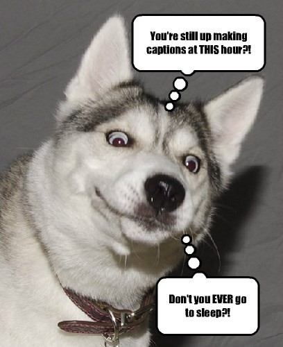 dogs,lols,late