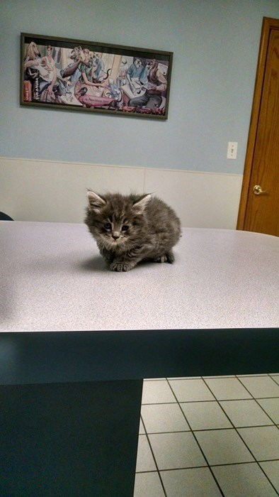 Dis Vet Table is Big and Cold!