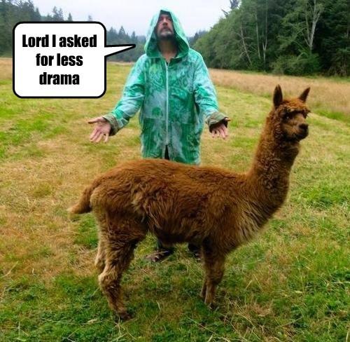 I thought you said more llama