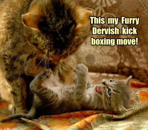 This  my  Furry Dervish  kick  boxing move!