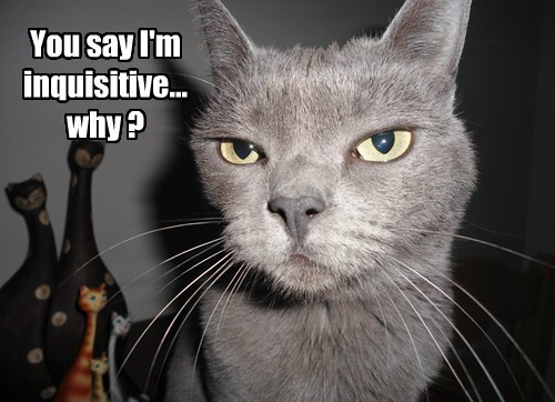 You say I'm inquisitive...why ?