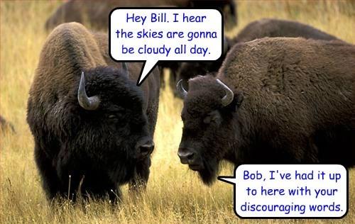 Songs,buffalo,funny