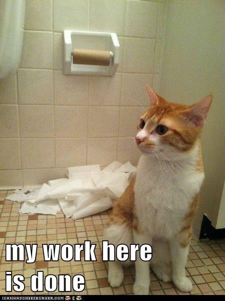 toilet paper,Cats