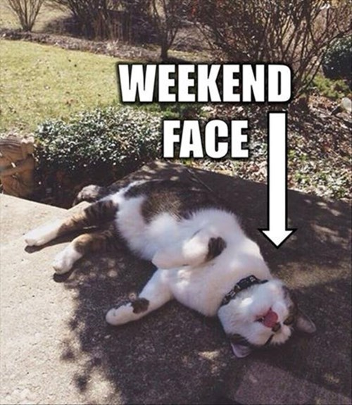 monday thru friday,expression,weekend,Cats,g rated