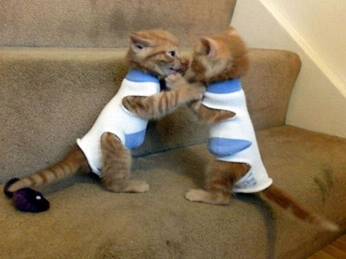 poorly dressed,socks,kitten,cat fight,Cats