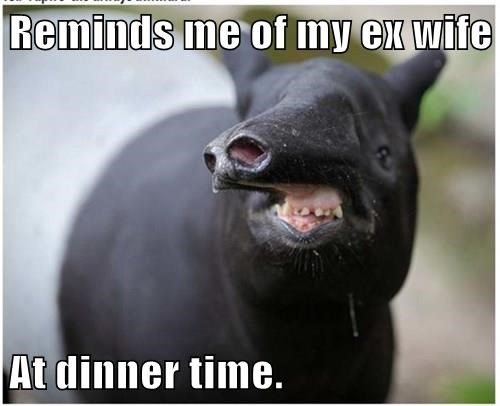 Reminds me of my ex wife  At dinner time.