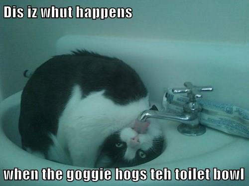 Dis iz whut happens   when the goggie hogs teh toilet bowl