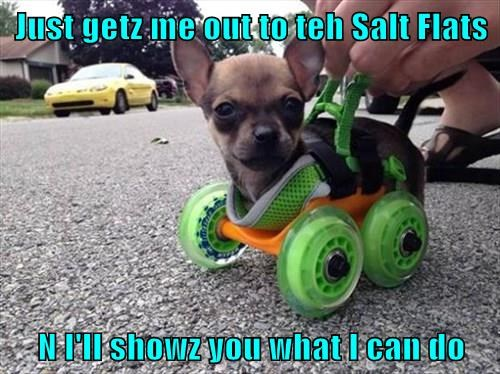 Just getz me out to teh Salt Flats  N I'll showz you what I can do