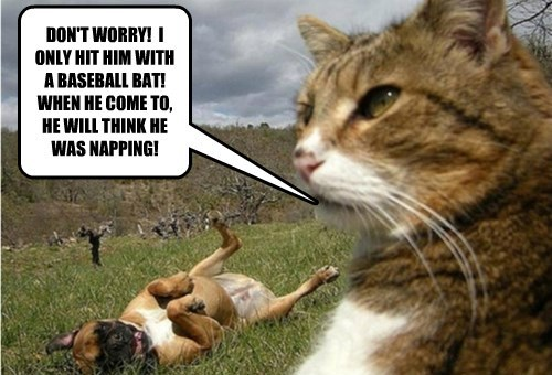 A Cat's Way of Getting Peace and Quiet!