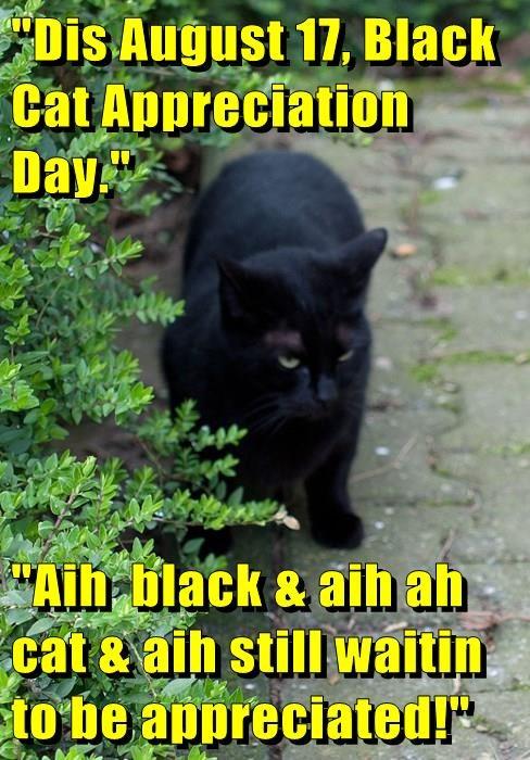 """Dis August 17, Black Cat Appreciation Day.""  ""Aih  black & aih ah cat & aih still waitin to be appreciated!"""