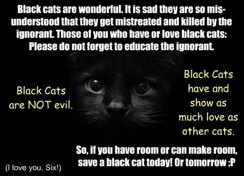Black Cat Appreciation Day!