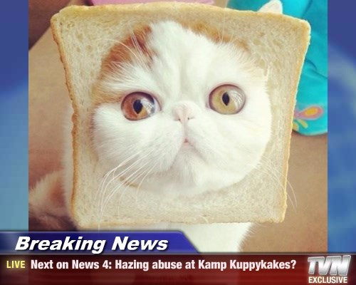 Breaking News - Next on News 4: Hazing abuse at Kamp Kuppykakes?