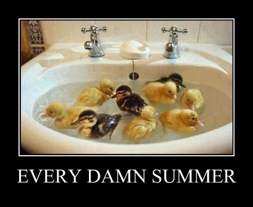 bugs,summer,ducks,funny