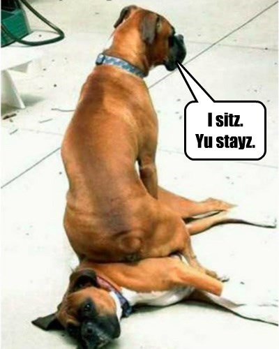 dogs,stay,I sits I fits,funny