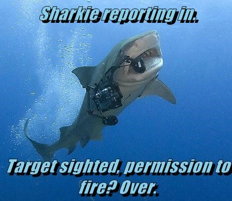 Sharkie reporting in.  Target sighted, permission to fire? Over.