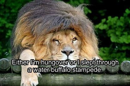 Either I'm hungover or I slept through a water buffalo stampede.
