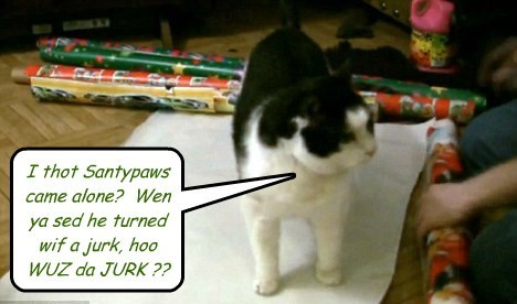Curious Kitty asks Qweschun after hearing story, The Night Before Catmus..
