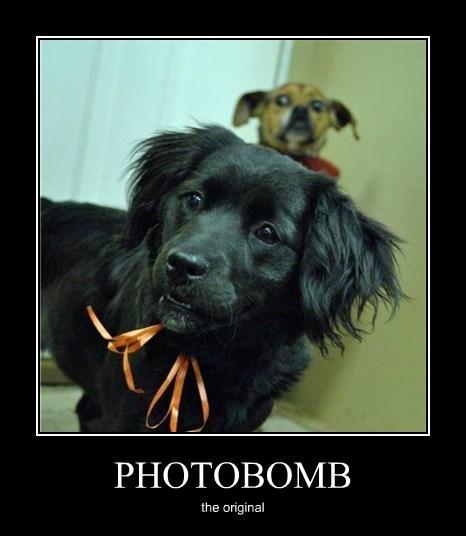 photobomb,dogs