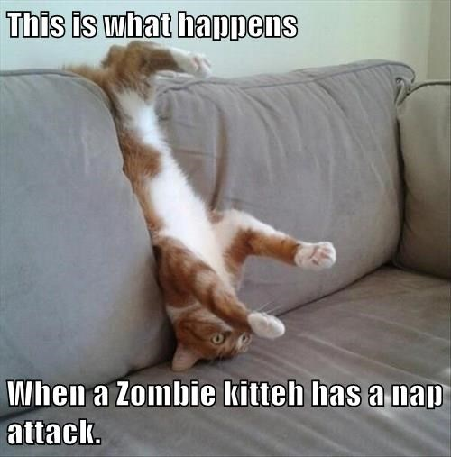 This is what happens  When a Zombie kitteh has a nap attack.