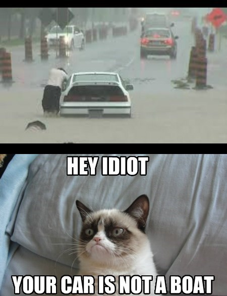 Grumpy Cat Automotive Tips