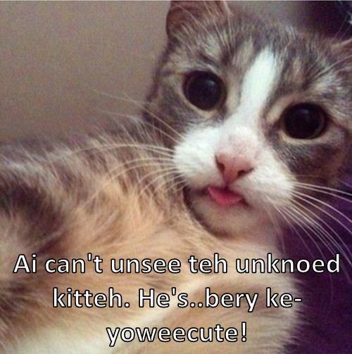 Ai can't unsee teh unknoed kitteh. He's..bery ke-yoweecute!
