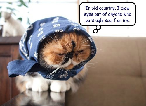 In old country, I claw eyes out of anyone who puts ugly scarf on me.