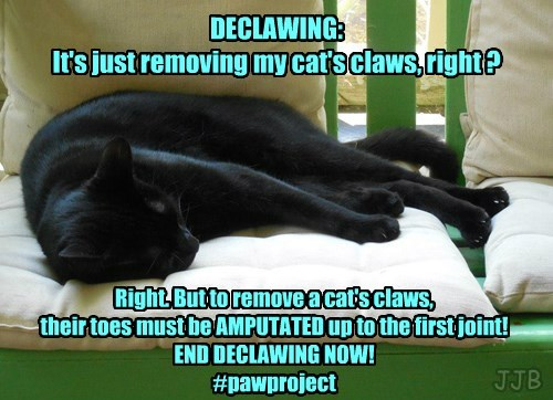 Declawing is Amputation!