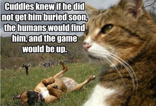 Yu duzn't rent bakhoes to kats? Thatz diskrimanashun!
