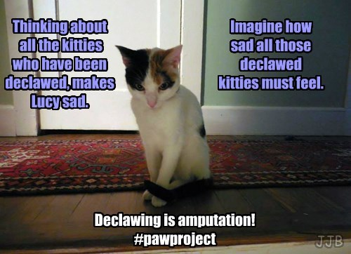 End Declawing Now!