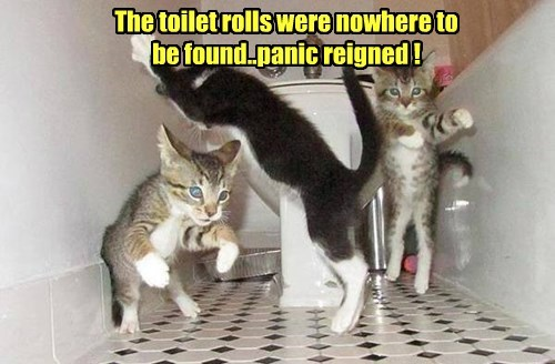 The toilet rolls were nowhere to be found..panic reigned !