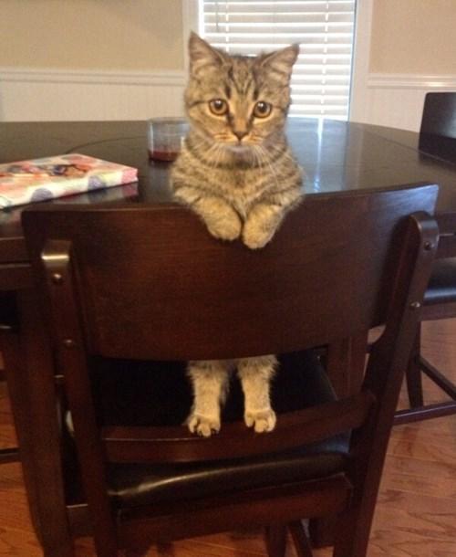 waiting,noms,Cats