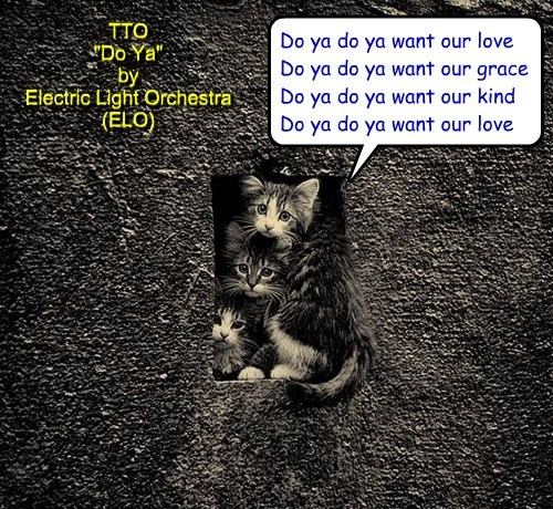 """""""We Can Has Forever Home?"""" (TTO """"Do Ya"""" by Electric Light Orchestra (ELO))"""