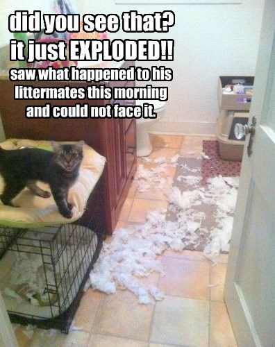 did you see that? it just EXPLODED!!