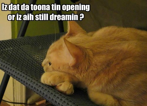 Iz dat da toona tin opening or iz aih still dreamin ?