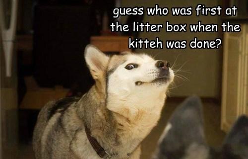 dogs,gross,litter box