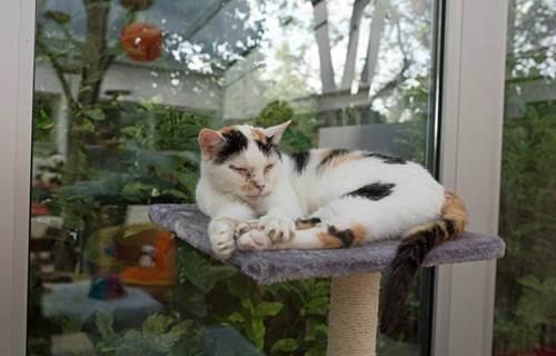 Window Display Kitteh - Cats up for adoption