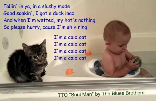 """""""Cat vs Bath"""" (TTO """"Soul Man"""" by The Blues Brothers)"""