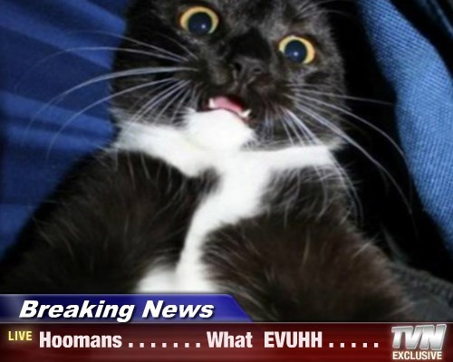 Breaking News - Hoomans . . . . . . . What  EVUHH . . . . .