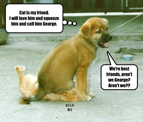 Cat is my friend. I will love him and squeeze him and call him George.