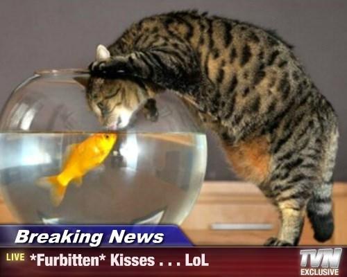 Breaking News - *Furbitten* Kisses . . . LoL