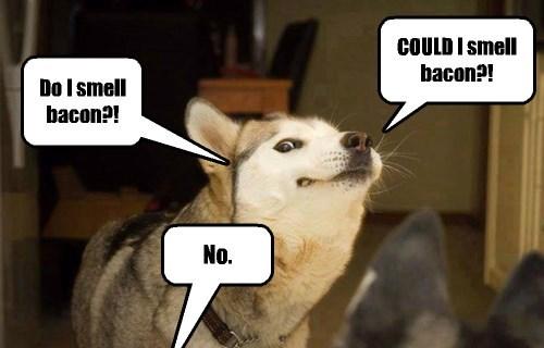 I wish I had never taught my dog to talk.