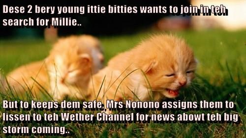 Dese 2 bery young ittie bitties wants to join in teh search for Millie..  But to keeps dem safe, Mrs Nonono assigns them to lissen to teh Wether Channel for news abowt teh big storm coming..