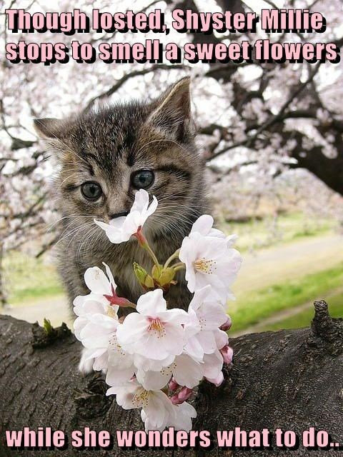 Though losted, Shyster Millie stops to smell a sweet flowers  while she wonders what to do..