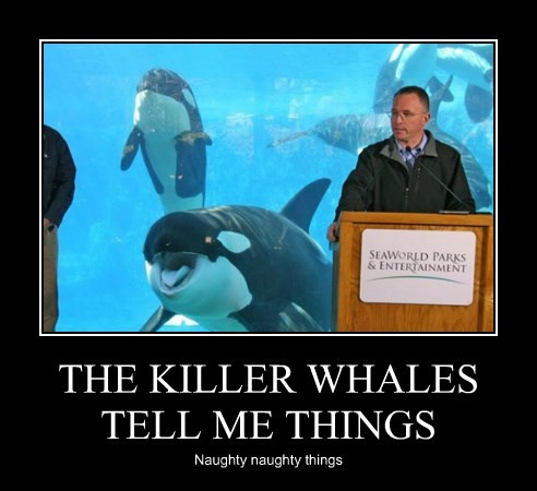 THE KILLER WHALES TELL ME THINGS