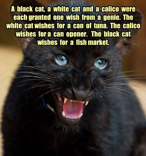 Ergo, black cats are smarter than your average cat