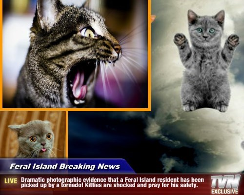 Feral Island Breaking News - Dramatic photographic evidence that a Feral Island resident has been picked up by a tornado! Kitties are shocked and pray for his safety.