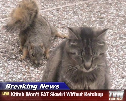 Breaking News - Kitteh Won't EAT Skwirl Wiffout Ketchup