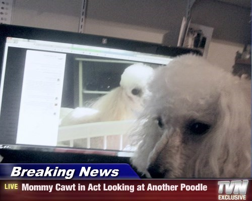 Breaking News - Mommy Cawt in Act Looking at Another Poodle
